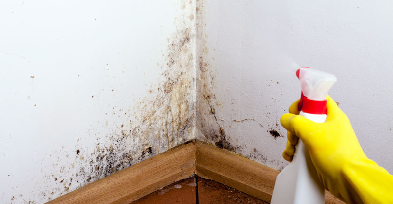 best mold removal product